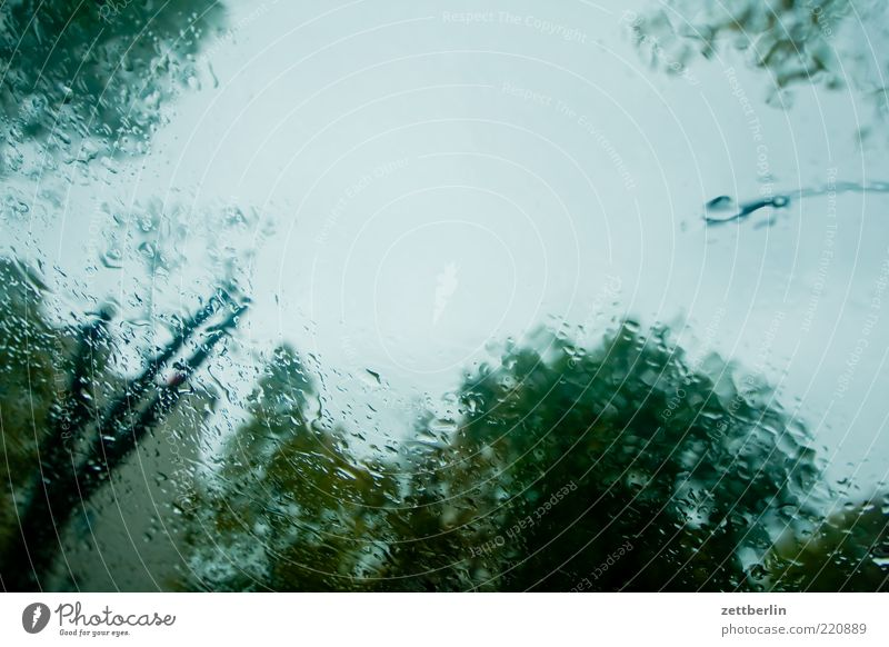 Tree Rain Weather Environment Wet Climate Storm Slice October Hazy Copy Space Bad weather Month Nature Windscreen
