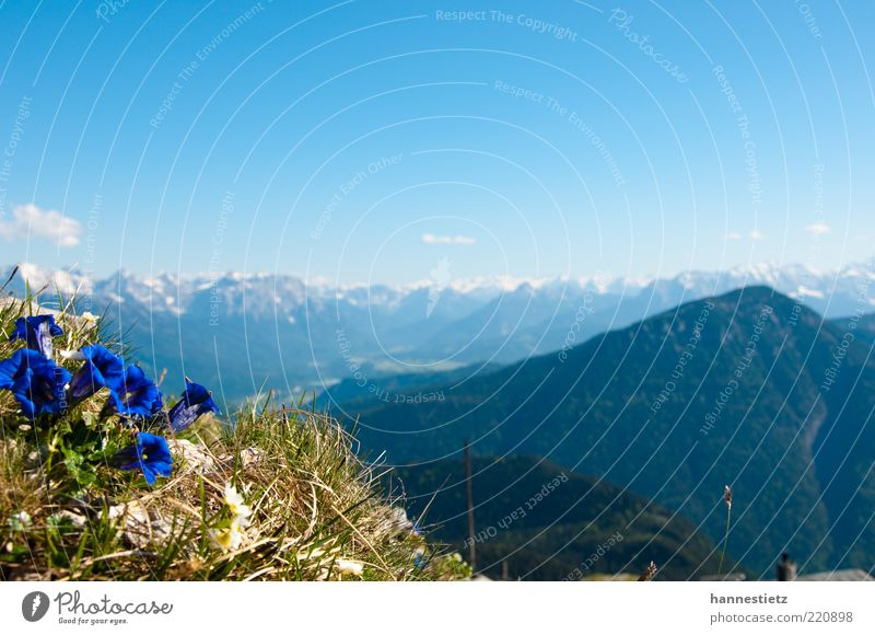 mountain idyll Far-off places Freedom Mountain Nature Landscape Plant Spring Summer Flower Grass Alps Peak Blue Bavaria Gentian plants Upper Bavaria