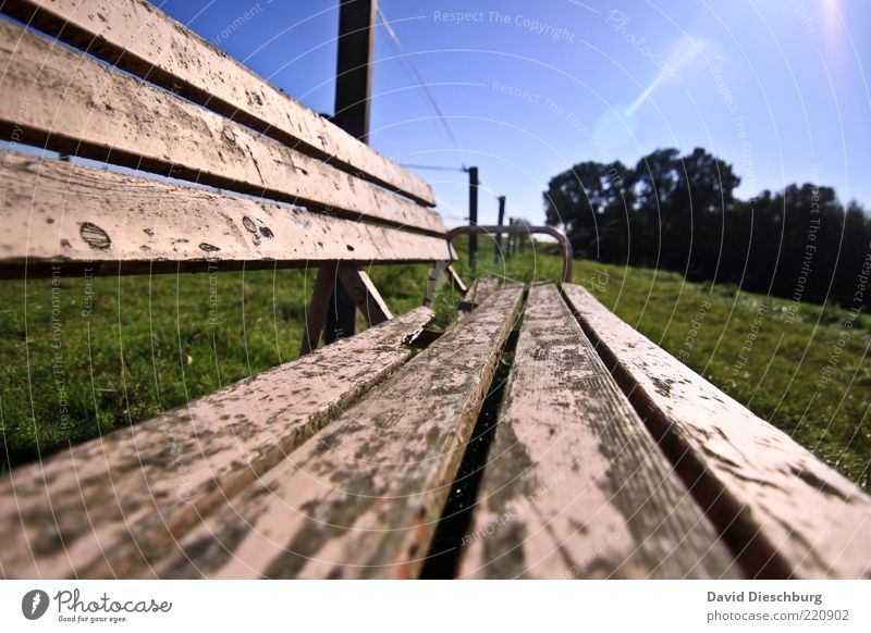 Sit down and enjoy... Nature Plant Cloudless sky Summer Beautiful weather Tree Grass Meadow Blue Green Bench Wood Old Relaxation Calm Varnish Brittle