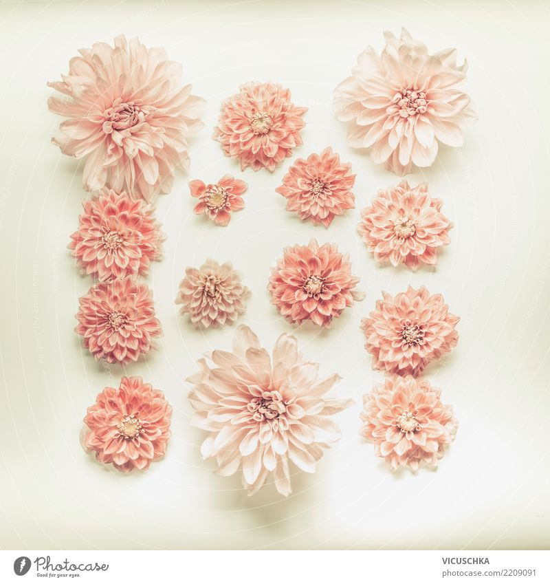 Nature Plant Summer Flower Blossom Love Style Feasts & Celebrations Pink Design Decoration Birthday Sign Soft Wedding Bouquet