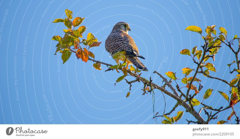Sky Nature Blue Tree Animal Leaf Forest Yellow Environment Autumn Bird Orange Trip Park Elegant Wild animal