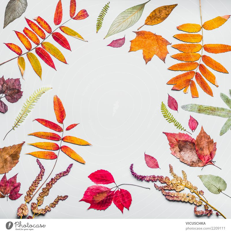 Autumn frame from various colorful dried autumn leaves Style Design Decoration Nature Plant Leaf Background picture Herbarium Frame Autumn leaves Autumnal
