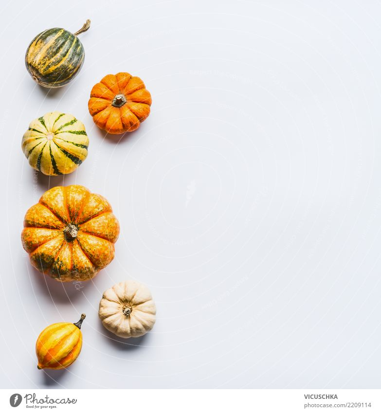 Nature Healthy Eating Food photograph Autumn Background picture Style Design Symbols and metaphors Vegetable Hallowe'en Pumpkin Selection Thanksgiving Composing