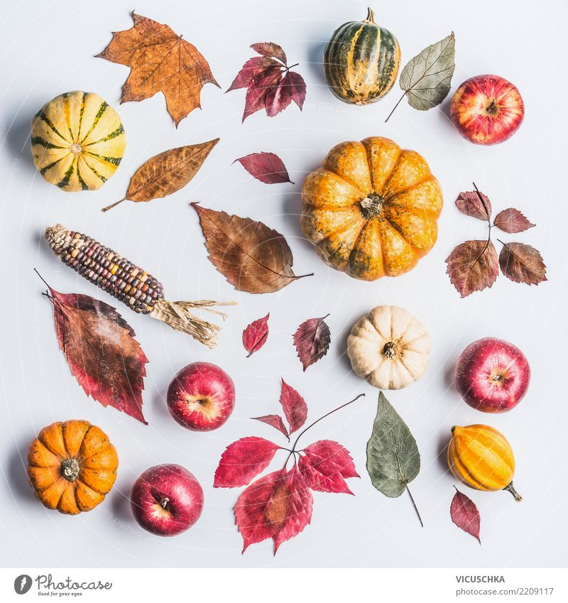 Autumn composing with pumpkin, apples and leaves Vegetable Apple Lifestyle Style Design Thanksgiving Hallowe'en Nature Leaf Decoration Sign Ornament Composing