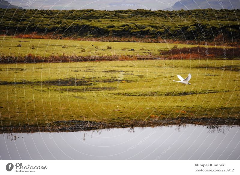 Nature Water Plant Animal Far-off places Meadow Autumn Emotions Grass Mountain Freedom Landscape Air Bird Fly Environment