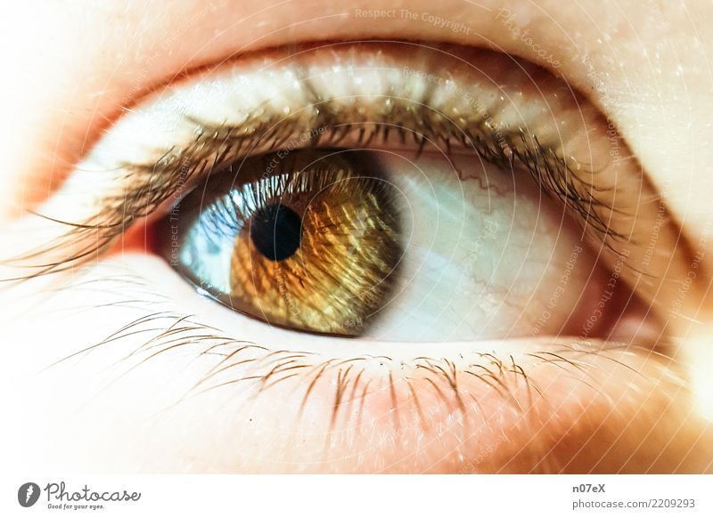 behind hazel eyes Feminine Eyes Art Glittering Looking Exotic Beautiful Brown Yellow Gold Emotions Warm-heartedness Esthetic Accuracy Perspective Senses Dream