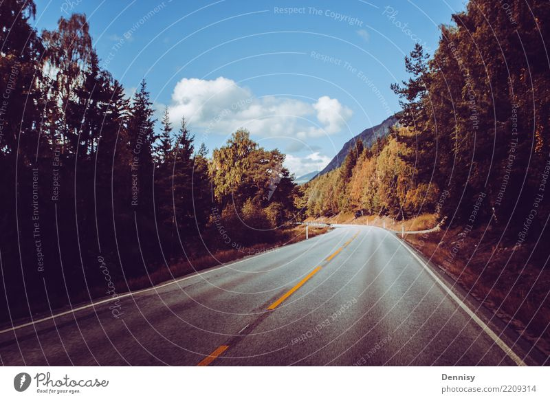 Norway road Vacation & Travel Adventure Far-off places Freedom Sun Environment Nature Landscape Plant Beautiful weather Tree Forest Street Driving Natural Moody