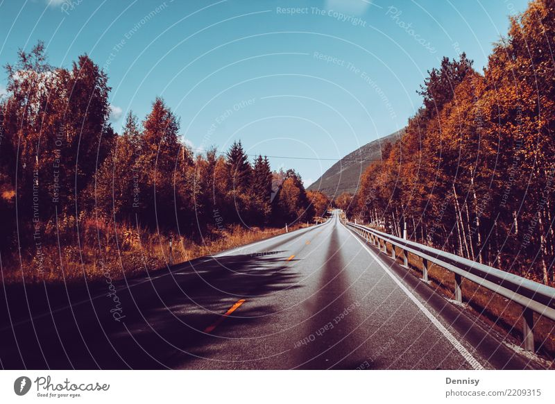 Norway road Vacation & Travel Tourism Adventure Far-off places Freedom Camping Summer Sun Hiking Tree Transport Traffic infrastructure Passenger traffic