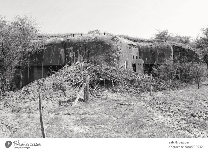 BUNKER - FRANCE Field Ruin Lanes & trails Dugout Theater of war Black & white photo Exterior shot Detail Neutral Background Day Bushes Twigs and branches