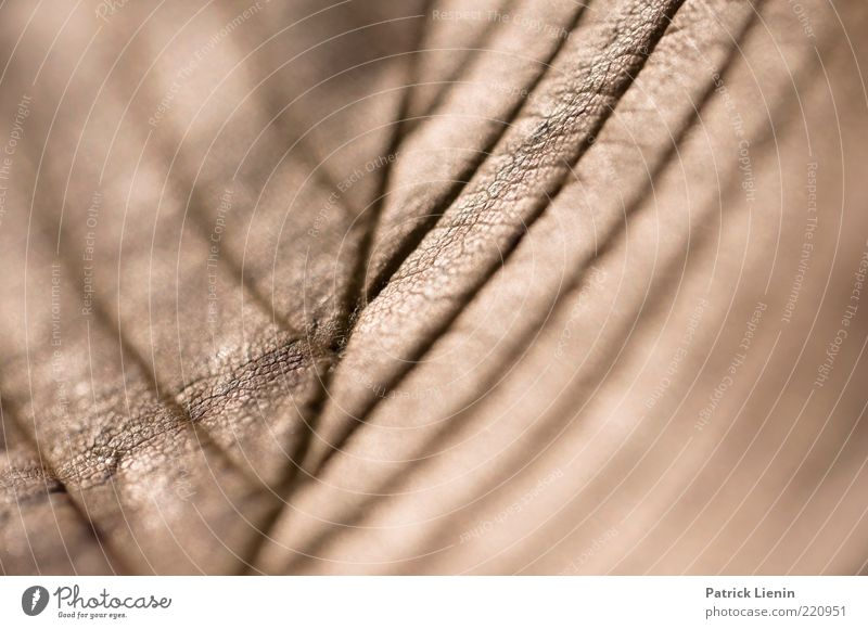 Nature Beautiful Plant Leaf Line Moody Environment Elements Sharp-edged Rachis Brownish
