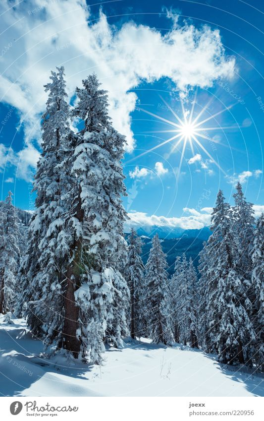 SOON Winter Snow Mountain Nature Landscape Sky Clouds Sun Sunlight Beautiful weather Tree Forest Alps Tall Cold Blue White Pure Calm Berchtesgaden Alpes