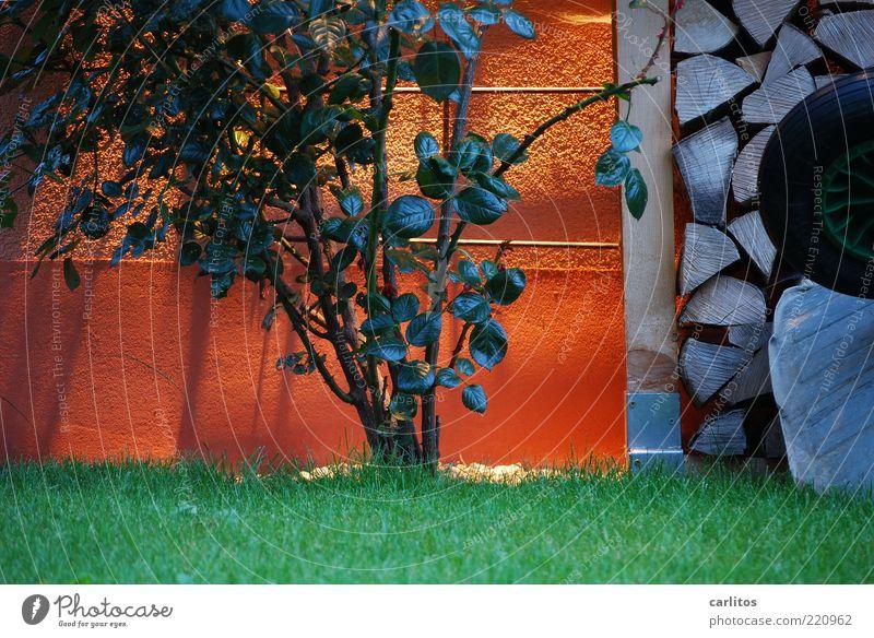 Green Leaf Meadow Wall (building) Garden Lighting Orange Rose Arrangement Lawn Round Bushes Wheel Plaster Stack Supply
