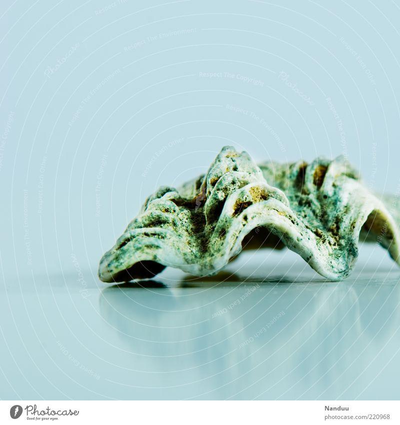 Beautiful Summer Animal Cold Mussel Maritime Marine animal Mussel shell Shell-shaped