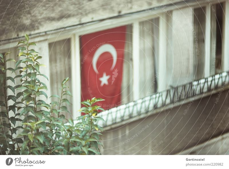 Leaf House (Residential Structure) Window Gray Facade Gloomy Flag Decoration Culture Symbols and metaphors Turkey Copy Space Istanbul Twigs and branches Plant
