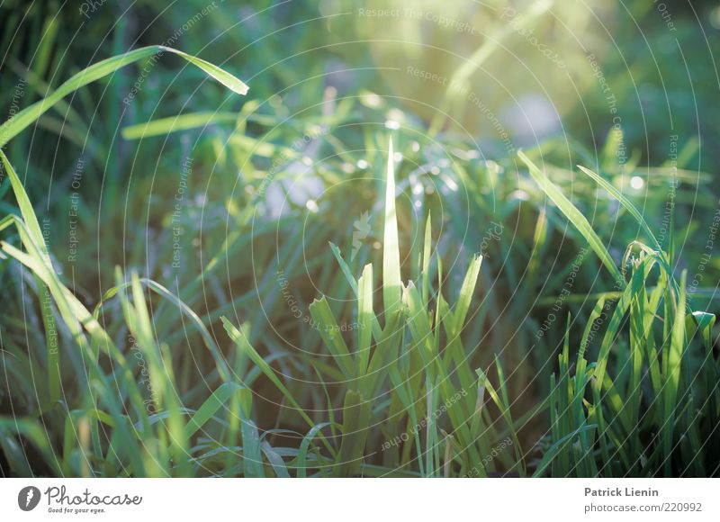 good morning sunshine Environment Nature Plant Earth Sunlight Autumn Weather Beautiful weather Grass Leaf Wild plant Meadow Esthetic Glittering Bright Green