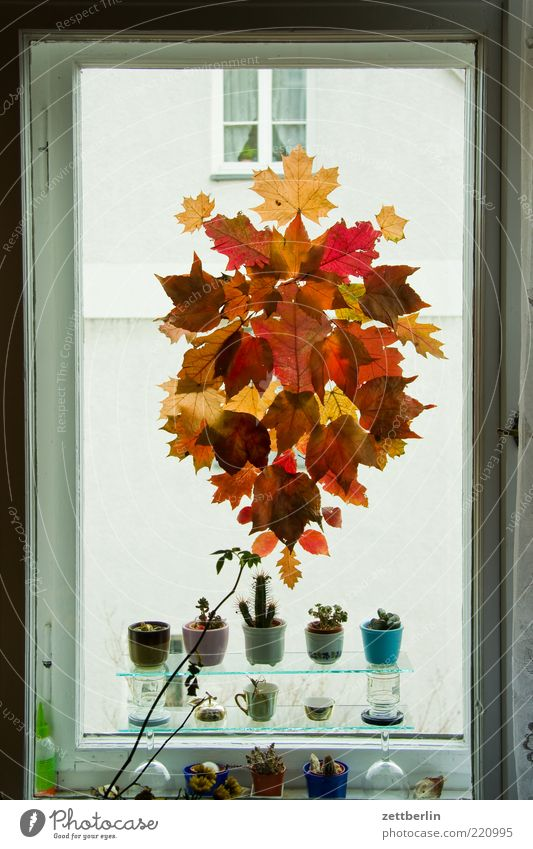 autumn Lifestyle Style Living or residing Flat (apartment) Arrange Interior design Decoration Nature Autumn Leaf Window Jewellery Autumn leaves Cactus