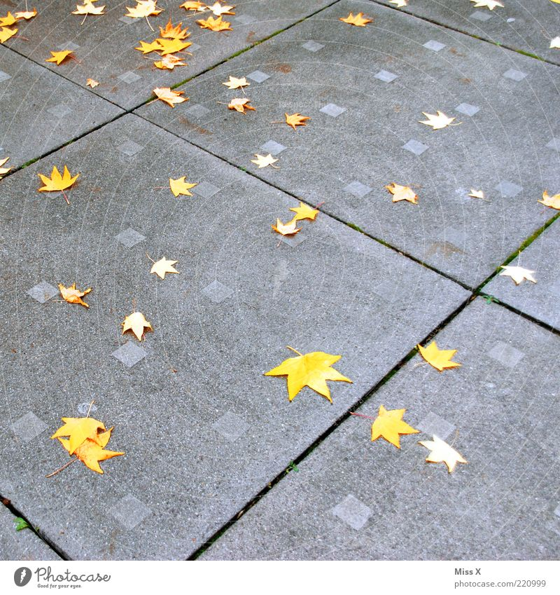 Leaf Yellow Autumn Star (Symbol) Places Lie To fall Stone Autumn leaves Pattern Autumnal Stone slab Autumnal colours Early fall Maple leaf Autumn wind