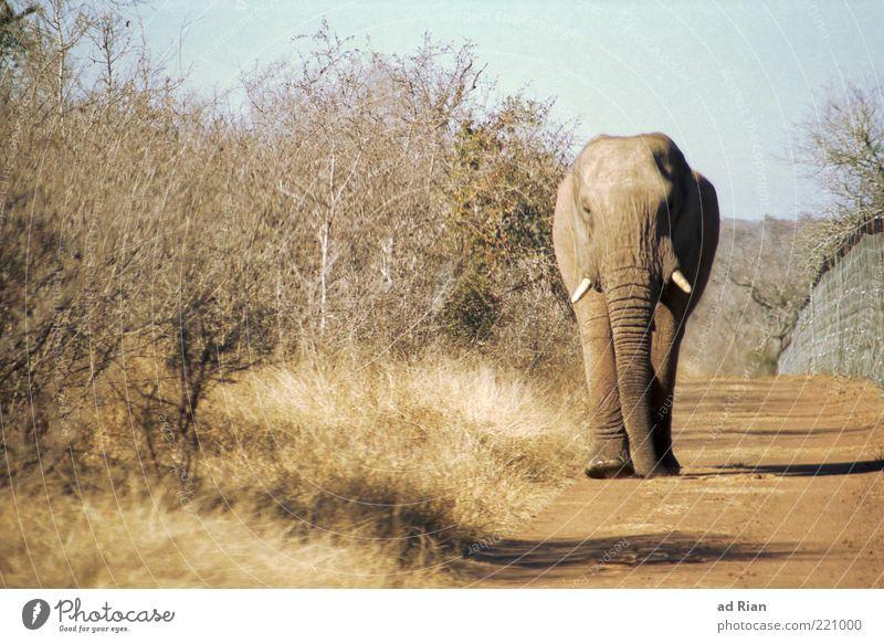 Nature Animal Sand Walking Earth Esthetic Elephant Safari Wayside Tusk