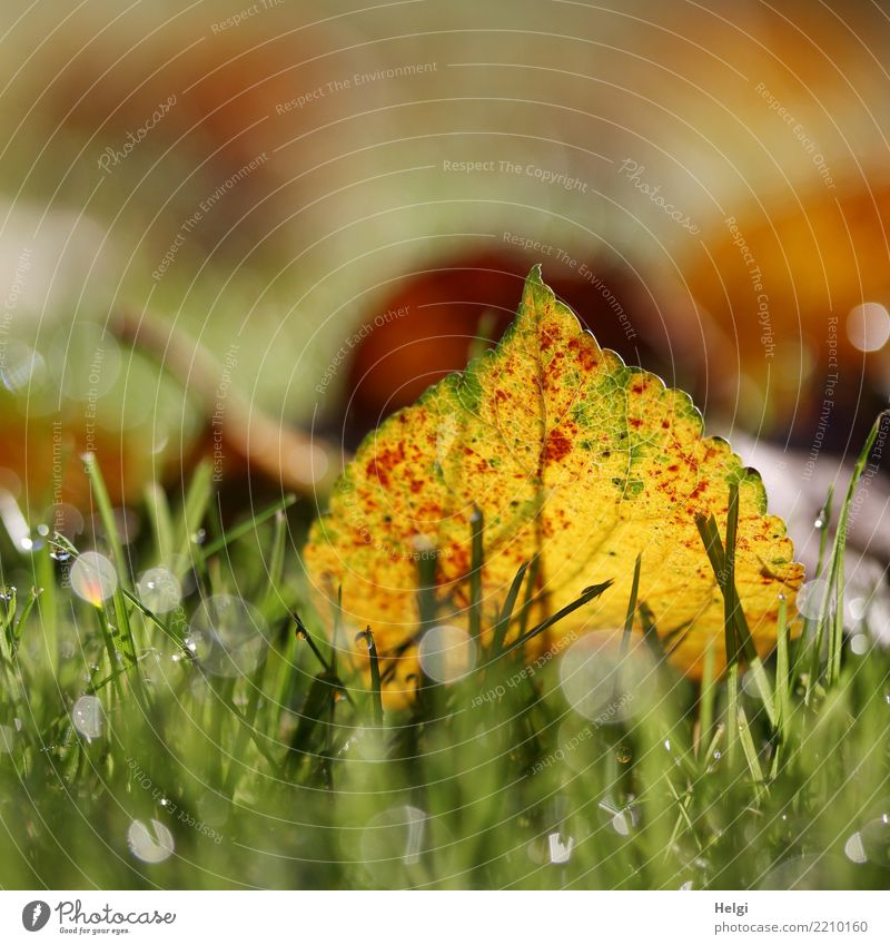 Nature Plant Green White Red Leaf Yellow Environment Autumn Natural Grass Small Garden Brown Moody Illuminate