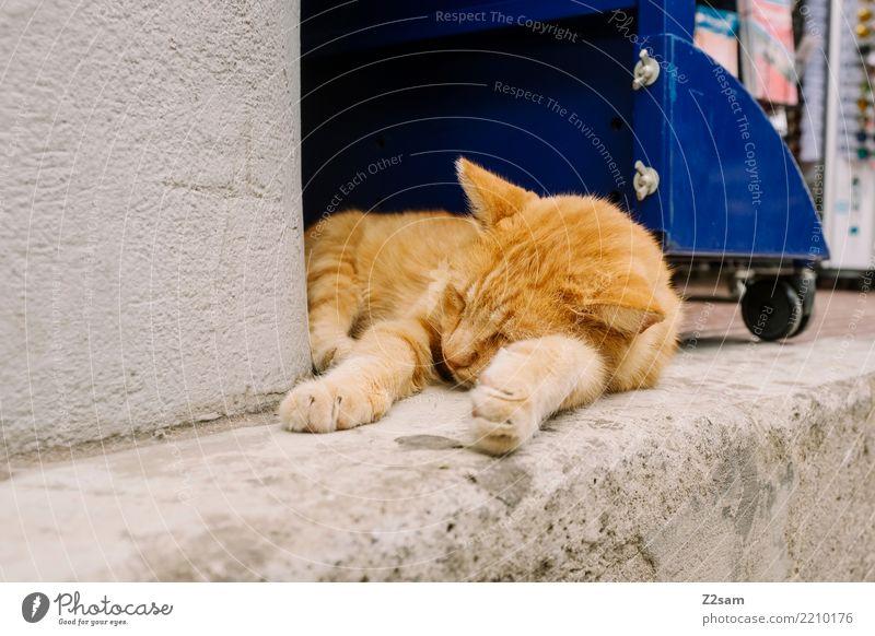 dog tired Vacation & Travel Summer vacation Village Town Animal Pet Cat Relaxation Lie Sleep Elegant Cute Gold Caution Serene Calm Fatigue Greece Kos Tabby cat