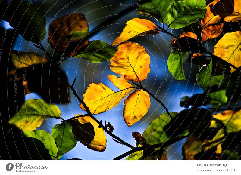 Nature Green Plant Leaf Black Yellow Dark Autumn Bright Brown Illuminate Branch Seasons Indicate Autumn leaves Autumnal