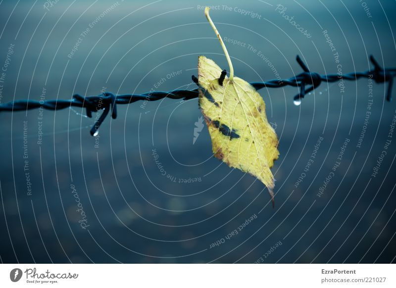 trapped leaf Environment Nature Plant Drops of water Autumn Climate Weather Bad weather Fog Rain Leaf Field Metal Steel Dark Cold Blue Yellow Black Loneliness