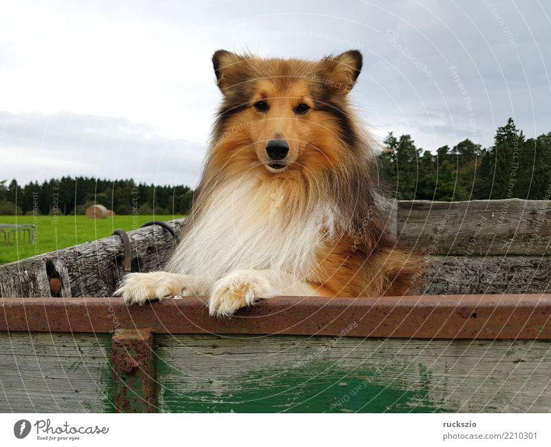 Dog Joy Happy Brown Authentic Pet Mammal Smart Farm animal