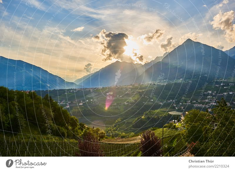 Nature Vacation & Travel Plant Summer Sun Landscape Tree Animal Clouds Far-off places Forest Mountain Environment Grass Tourism Freedom