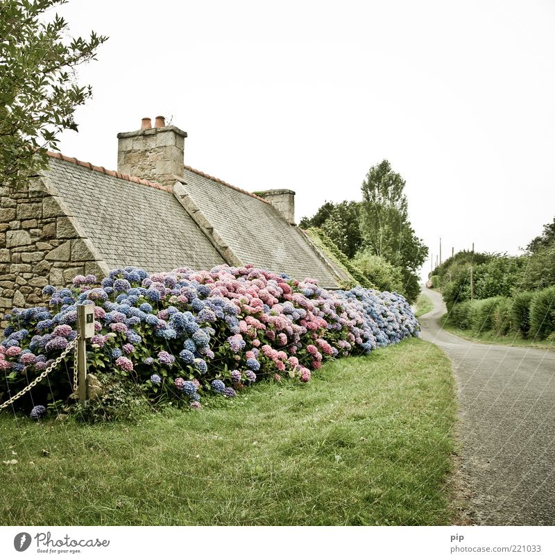 Tree Flower Blue Plant Summer Calm House (Residential Structure) Loneliness Street Blossom Grass Lanes & trails Landscape Pink Lawn Bushes