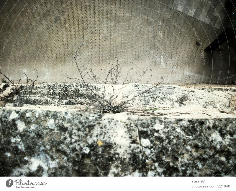 abyss Edge Wall (building) Wall (barrier) Plant Sidewalk Pedestrian precinct Paving stone Downward Bird's-eye view Twigs and branches Snow Copy Space top