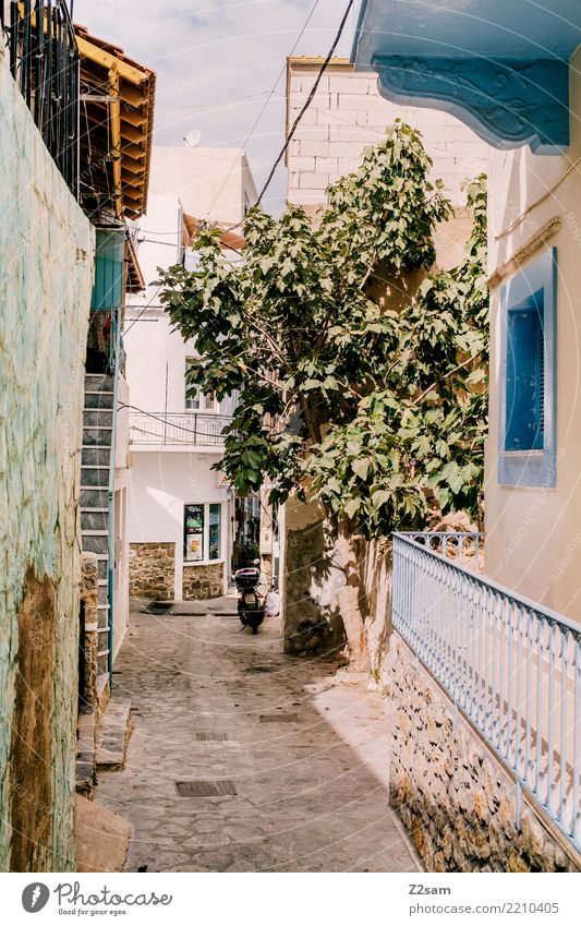 quiet location Summer Tree Village Fishing village Exotic Natural Serene Calm Loneliness Idyll Tourism Tradition Greece Kos Mediterranean Alley Old town Island