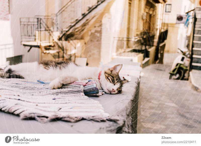 have a nap Fishing village Old town Pet Cat Relaxation To enjoy Lie Sleep Dream Cuddly Serene Calm Break Greece Kos Street Ceiling Colour photo Exterior shot