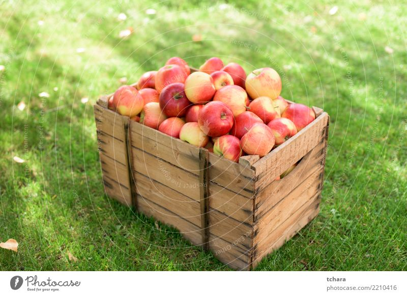 Red apples Fruit Apple Juice Summer Garden Nature Autumn Container Growth Fresh Bright Delicious Natural Juicy Green White Colour orchard food Basket Organic