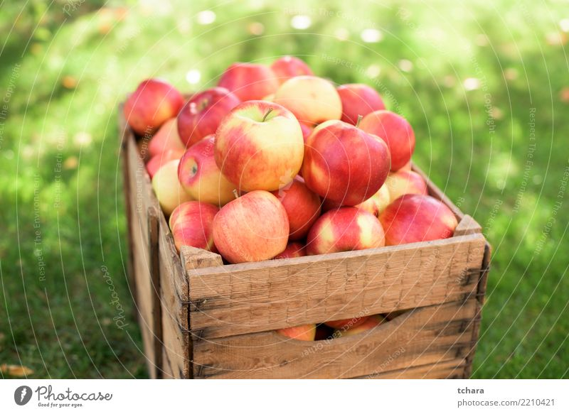 Red apples Fruit Apple Juice Summer Garden Nature Grass Container Fresh Bright Delicious Natural Juicy Green Colour healthy food Basket Organic fall Crops
