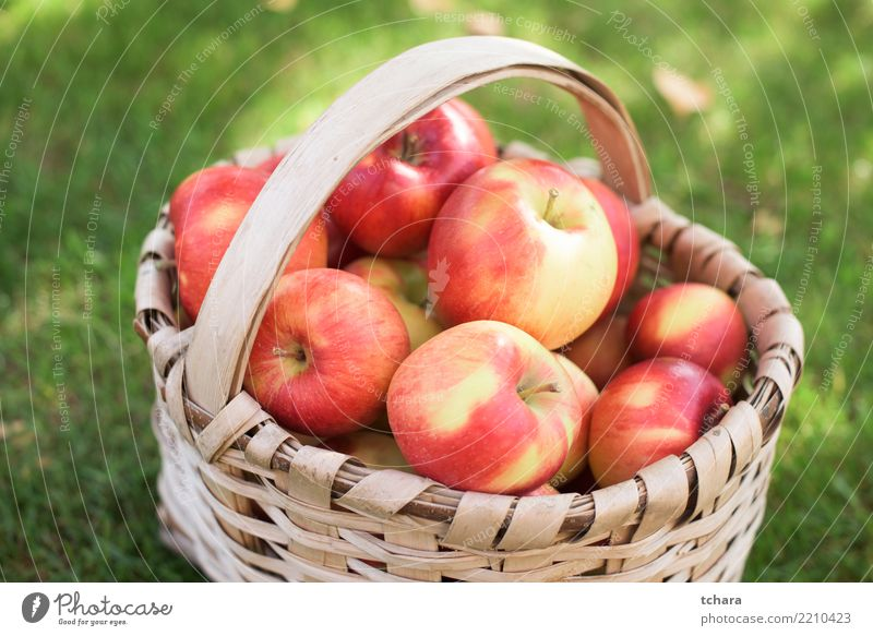 Red apples Fruit Apple Juice Summer Nature Landscape Plant Grass Container Growth Fresh Bright Delicious Natural Juicy Green healthy orchard food Basket Organic