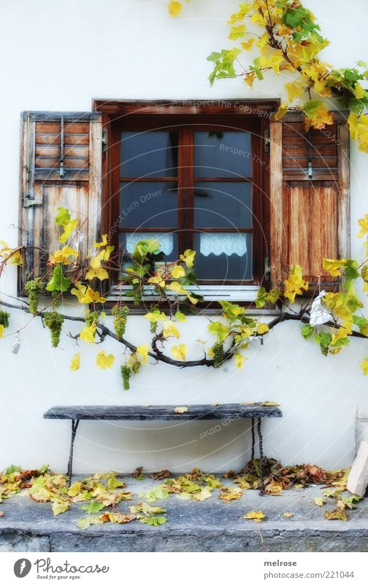 Old Calm Leaf House (Residential Structure) Relaxation Contentment Brown Vine Window pane Harmonious Home country Shutter Window Autumnal Creeper Agricultural crop