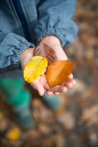 Child Human being Tree Leaf Forest Yellow Autumn Brown Hiking Infancy Study 3 Help Serene Fragrance Toddler