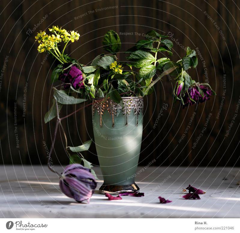 SummerStill Lifestyle Elegant Style Blossoming Faded Green Violet Emotions Joie de vivre (Vitality) Esthetic Transience Change Clematis Wild rose Blossom leave