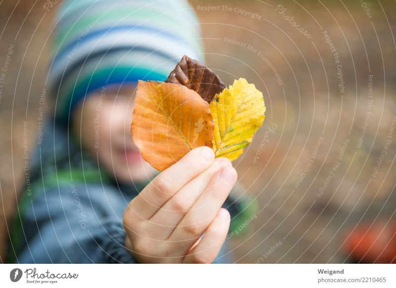 Child Human being Calm Life Yellow Autumn Sadness Boy (child) Brown Contentment Dream Growth Infancy 3 Team Firm
