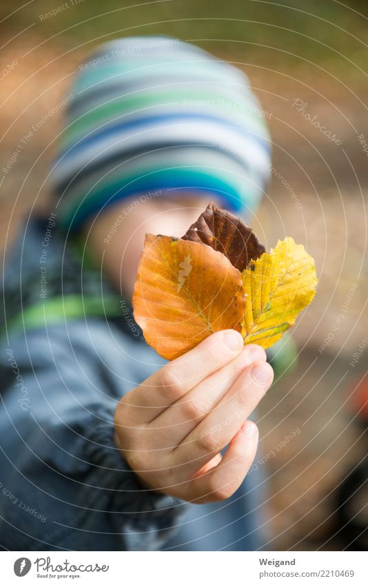 Child Human being Hand Relaxation Leaf Forest Autumn Sadness Boy (child) Park Dream Infancy 3 Discover Serene Collection