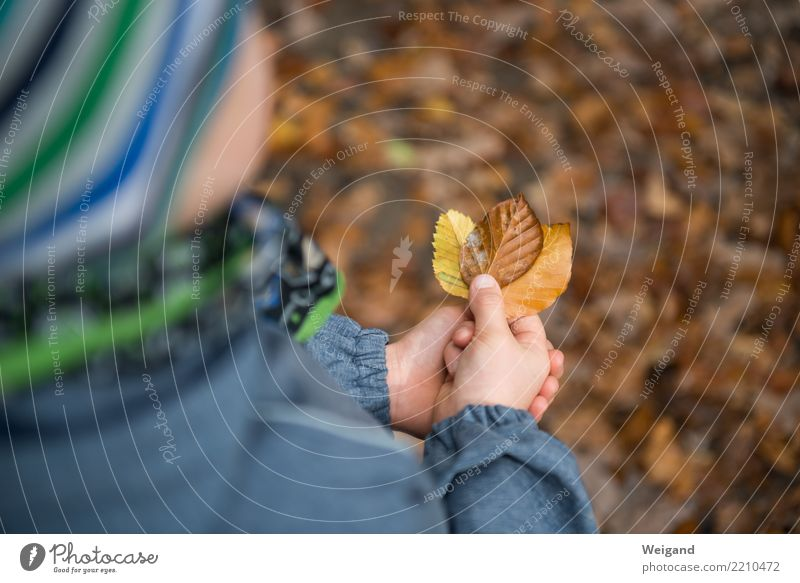 Three III Joy Life Contentment Senses Fragrance Kindergarten Child Toddler Infancy 1 Human being Autumn Park Dream Brown Multicoloured Yellow Brave Passion