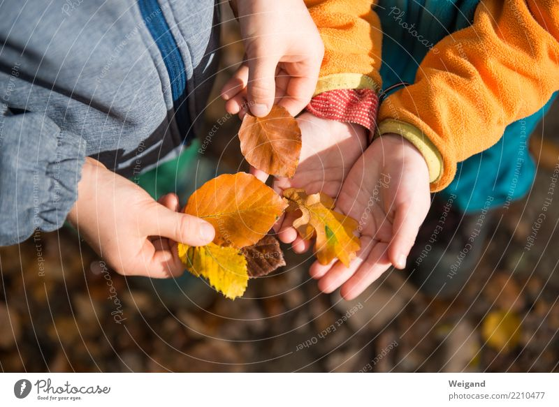 Child Human being Leaf Girl Forest Autumn Family & Relations Boy (child) Together Orange Hiking Infancy Study Help Serene Collection
