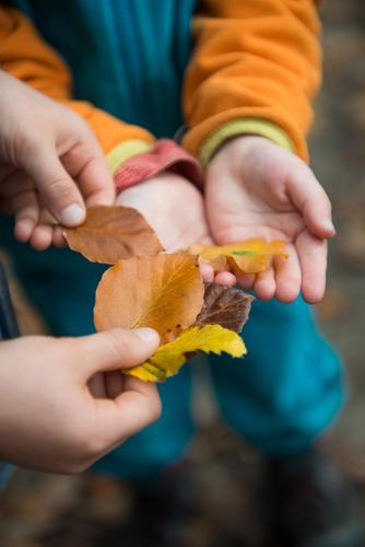 Collect & Trade Contentment Parenting Kindergarten Child Study Toddler Girl Boy (child) Infancy 2 Human being Bad weather Uniqueness Forest Swap Leaf Autumn