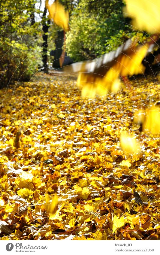 The leaves fall Environment Nature Plant Autumn Beautiful weather Wind Tree Leaf Forest To fall Illuminate Yellow Green Bright Lanes & trails Right ahead