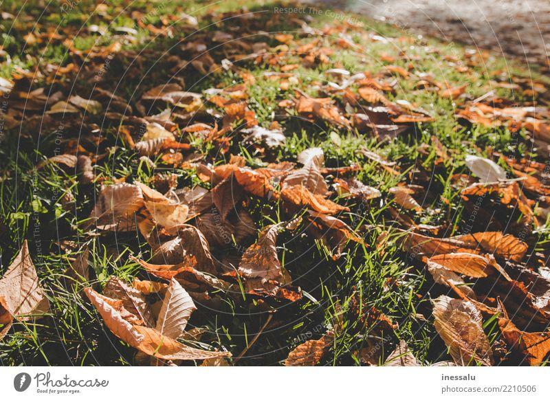 Deep autumn Beautiful Nature Landscape Joy Business Love Autumn Dry leaves Sun Light (Natural Phenomenon) October November Colour photo Deserted Morning Day