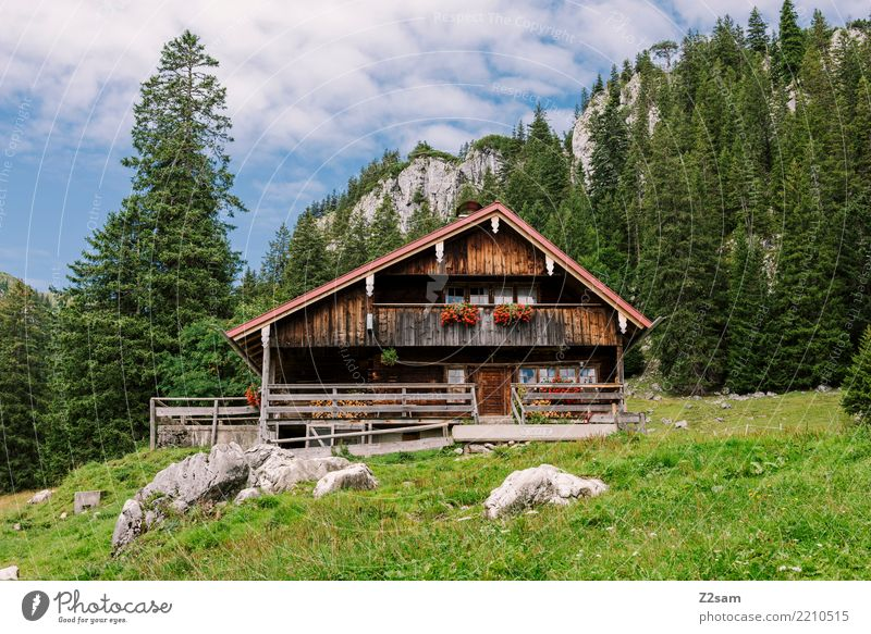 home Mountain Hiking Nature Landscape Summer Beautiful weather Forest Alps House (Residential Structure) Detached house Hut Simple Kitsch Loneliness Relaxation