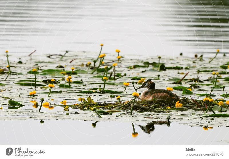 Nature Water Plant Animal Calm Environment Landscape Spring Lake Moody Bird Wild animal Natural Blossoming Pond Sustainability