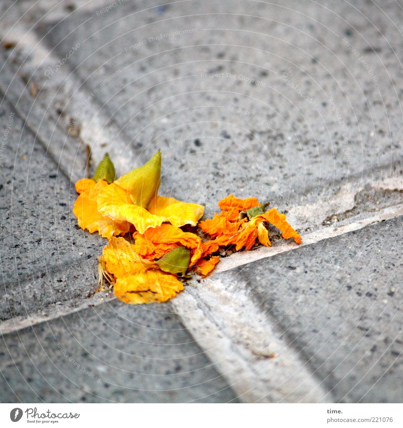 Beautiful Yellow Blossom Happy Gray Contentment Orange Concrete Hope Authentic End Change Lie Crucifix Sidewalk Dry