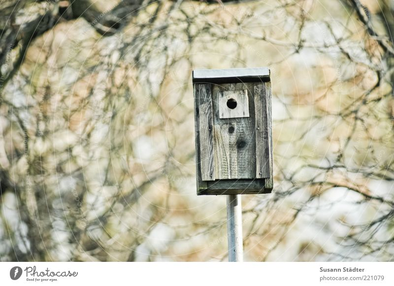 1-room-apartment Environment Nature Autumn Beautiful weather Tree Birdhouse Branch speed camera Speed control Copy Space left Shallow depth of field
