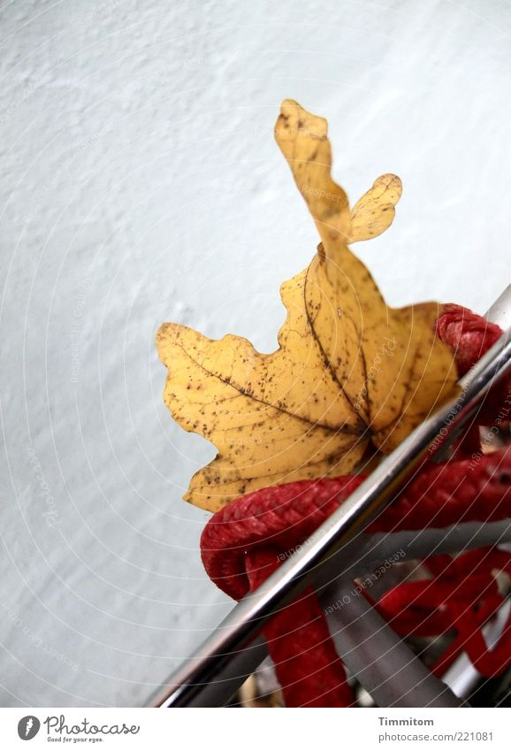 Nature Red Leaf Yellow Metal Moody Exceptional Rope Autumn leaves Rachis